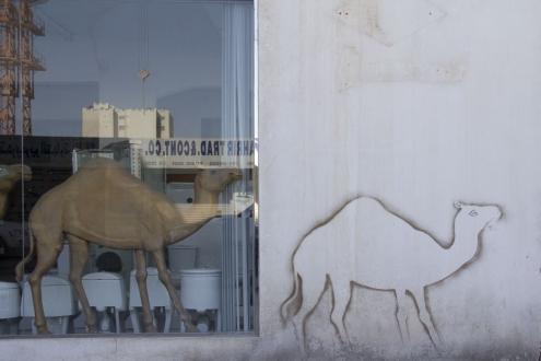Norbert Goertz, Camel