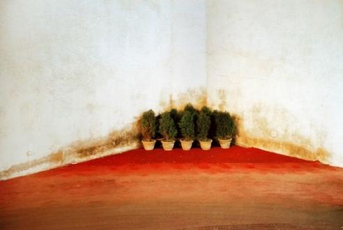 Corner Bonsai